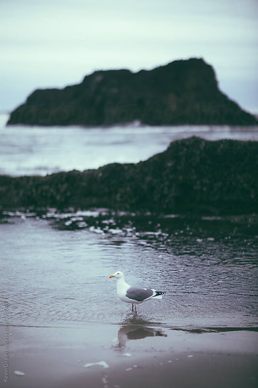 Seagull by Kevin Gilgan for Stocksy United