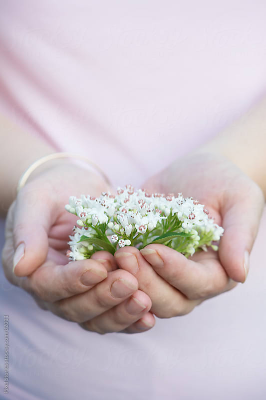 Elderberry flowers in hands by Pixel Stories for Stocksy United