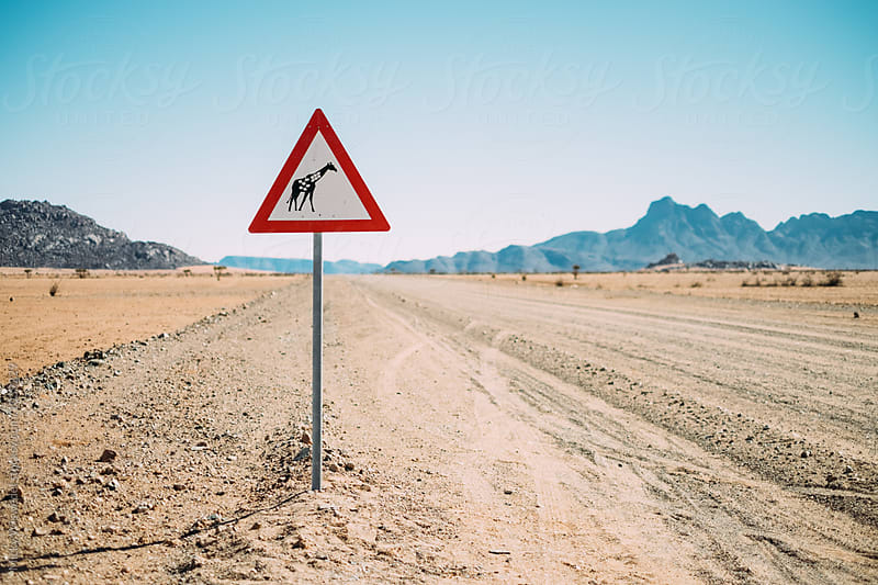 empty desert road with a yield for Giraffes sign post by Micky Wiswedel for Stocksy United