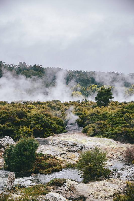 Whakarewarewa forest, New Zealand by Andrey Pavlov for Stocksy United