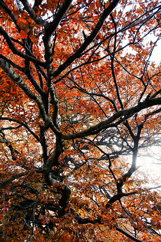 Autumn tree branch by Pixel Stories for Stocksy United