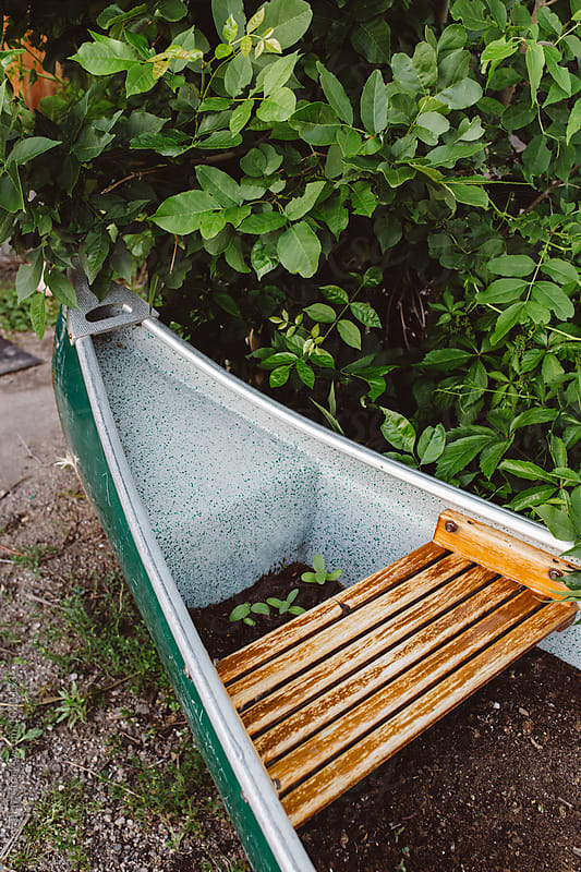 Garden planted in a canoe by Carey Shaw for Stocksy United