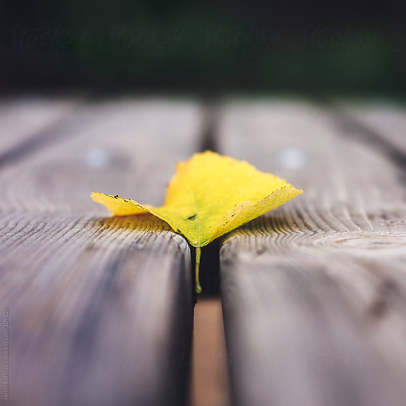 Yellow Leaf by Helen Sotiriadis for Stocksy United