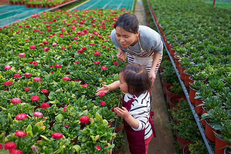 little asian girl working in the flower nursery with her mother by Bo Bo for Stocksy United