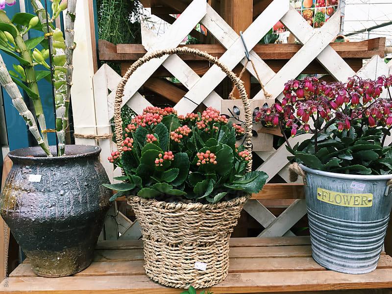 flower in flower shop by cuiyan Liu for Stocksy United
