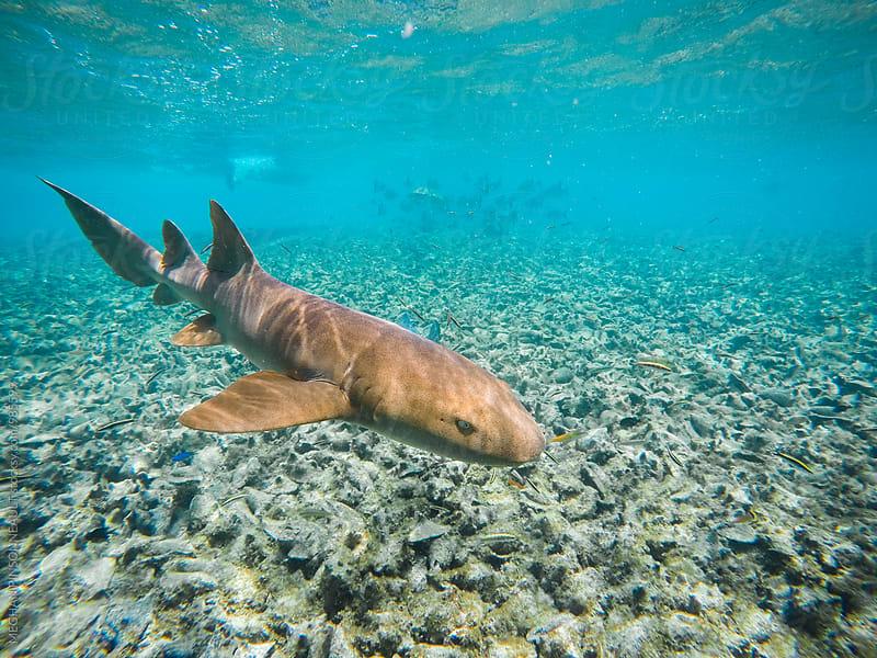 Nursing Shark in Tropical Underwater Wonderland by Meg Pinsonneault for Stocksy United