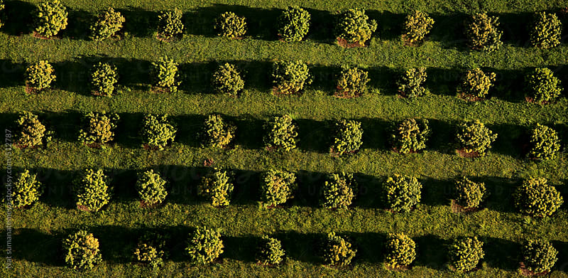 garden from the air by Nat sumanatemeya for Stocksy United