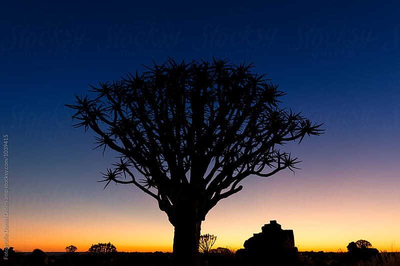 Quiver Tree Silhouette against sunset at Giants Playground, Ketmanshoop, Namibia. by Fotografie Daniel Osterkamp for Stocksy United