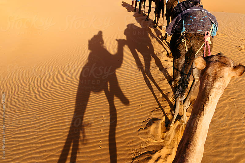Camel Caravan in the Sahara Desert by Good Vibrations Images for Stocksy United
