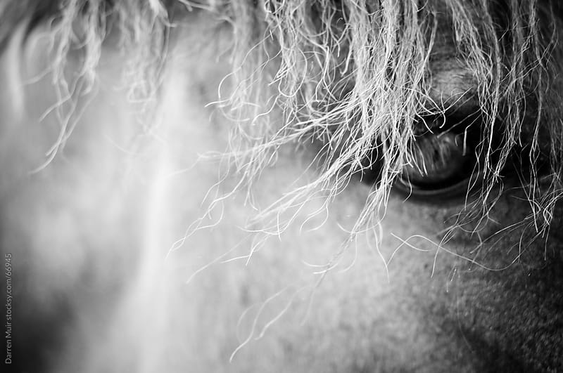 Horse close-up.  by Darren Muir for Stocksy United