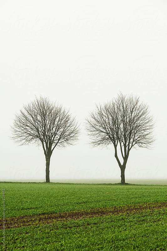 Trees against a foggy background by Jonatan Hedberg for Stocksy United