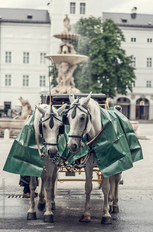 cab horses called fiaker in the oldtown of salzburg by Leander Nardin for Stocksy United