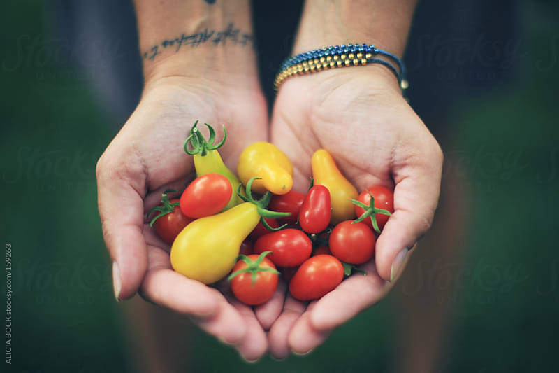 Hands Holding Cherry Tomatoes by ALICIA BOCK for Stocksy United