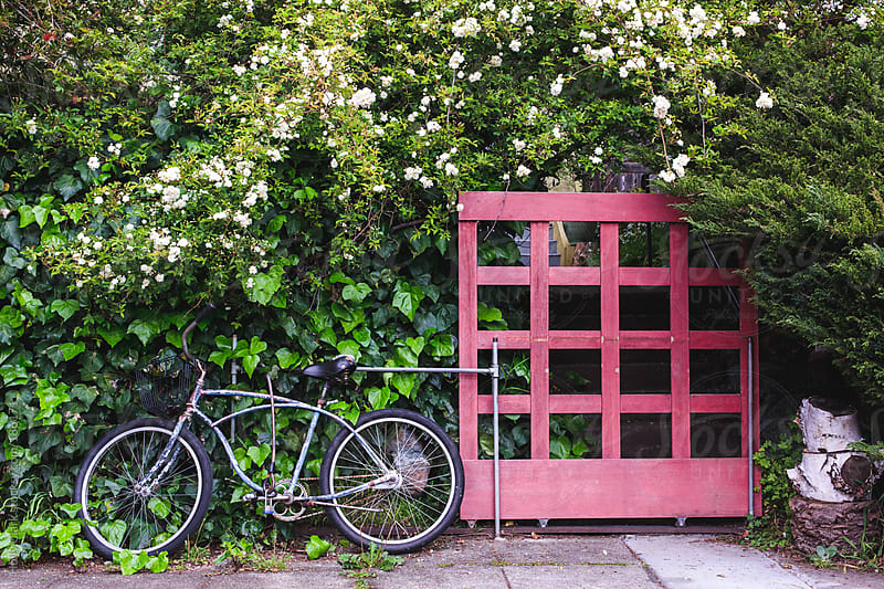 A vintage bicycle with a basket leans against an ivy-covered fence hiding a home. by Holly Clark for Stocksy United