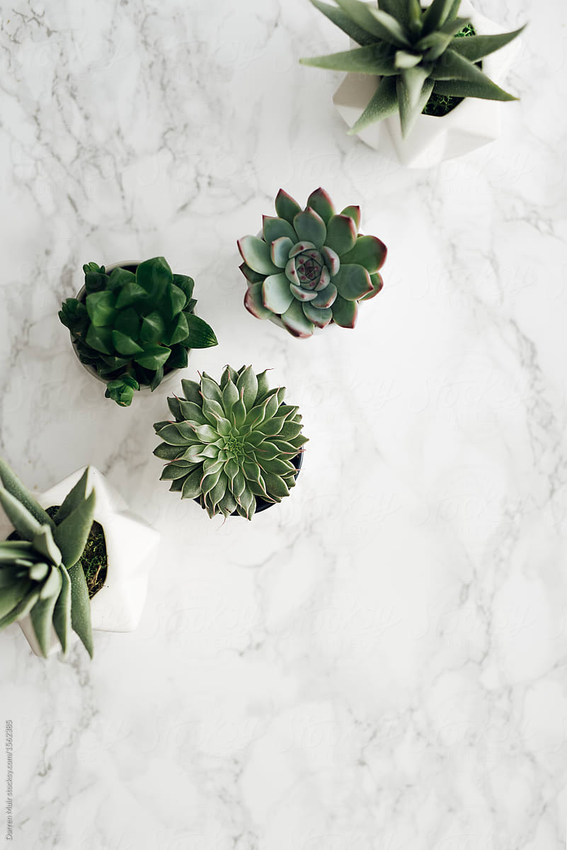 Succulents On Marble Background By Darren Muir