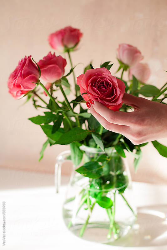 Female hands arranging a bouquet of roses indoor by Marija Mandic for Stocksy United
