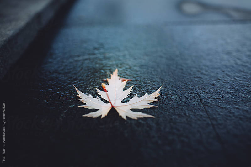 dry leaf on the wet floor by Thais Ramos Varela for Stocksy United