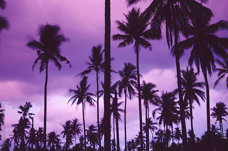 Summer silhouetted palm trees pattern during beautiful purple sunset by Wizemark for Stocksy United