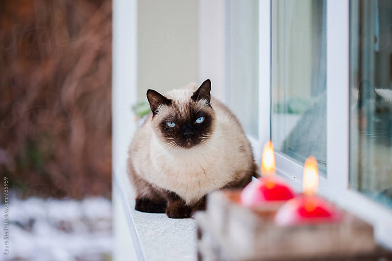 Cat laying on windowsill close to red candles burning looks at the camera in snowy day by Laura Stolfi for Stocksy United