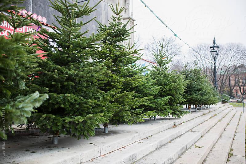 A Christmas tree store by Jovana Rikalo for Stocksy United