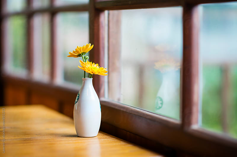 Yellow daisy flower in white vase on wooden table beside grille by Lawren Lu for Stocksy United