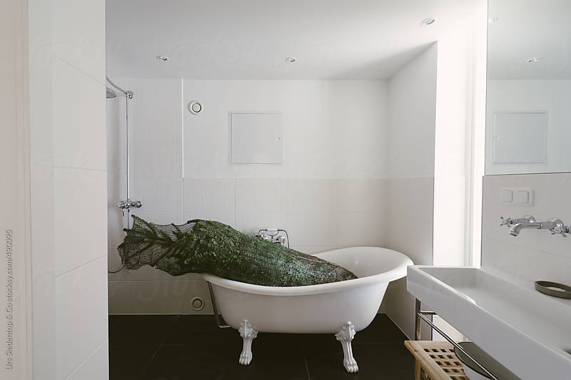 Intermediate storage of packed christmas tree in bathtub by Urs Siedentop & Co for Stocksy United