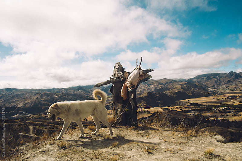 white dog with scarecrow on a hill by Oscar Lopez for Stocksy United
