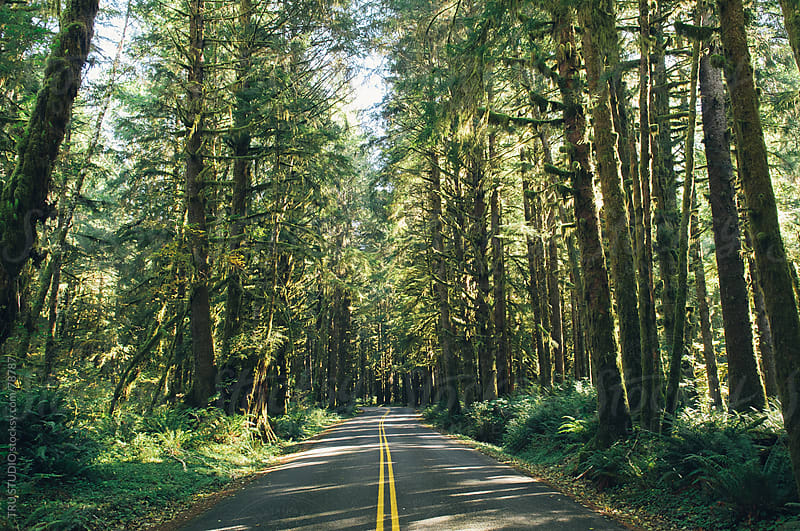 Washington Rainforest Road by TRU STUDIO for Stocksy United
