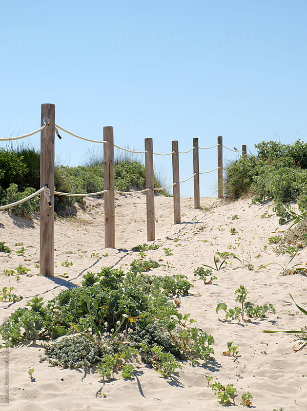 Wooden posts (timber) on a sandy landscape by Lucas Ottone for Stocksy United