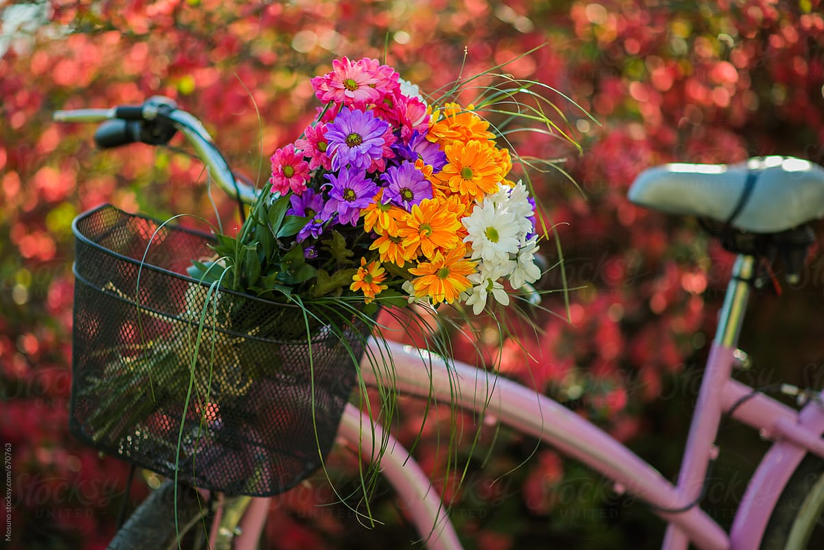 Bouquet Of Spring Flowers In A Bicycle Basket Stocksy United
