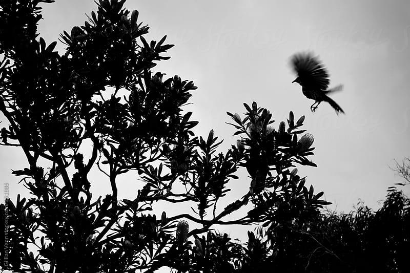 bird silhouette in tree by Gillian Vann for Stocksy United