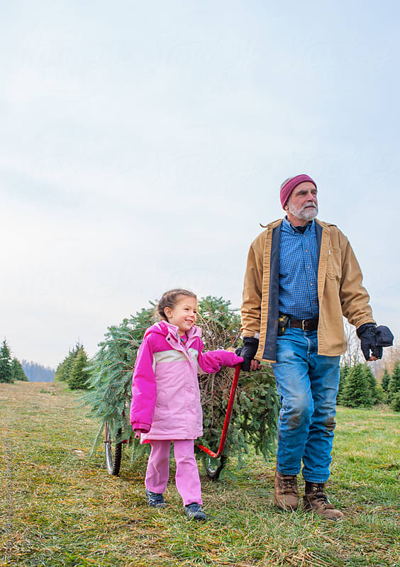 Grandfather and Granddaughter Retrieve Fresh Cut Christmas Tree by Brian McEntire for Stocksy United
