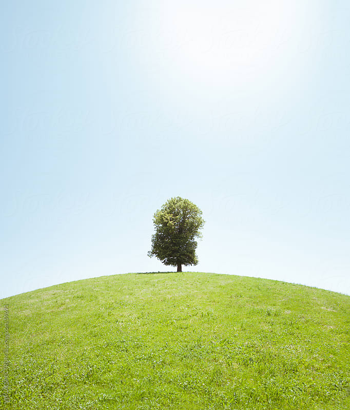 Tree on Hill by VISUALSPECTRUM for Stocksy United