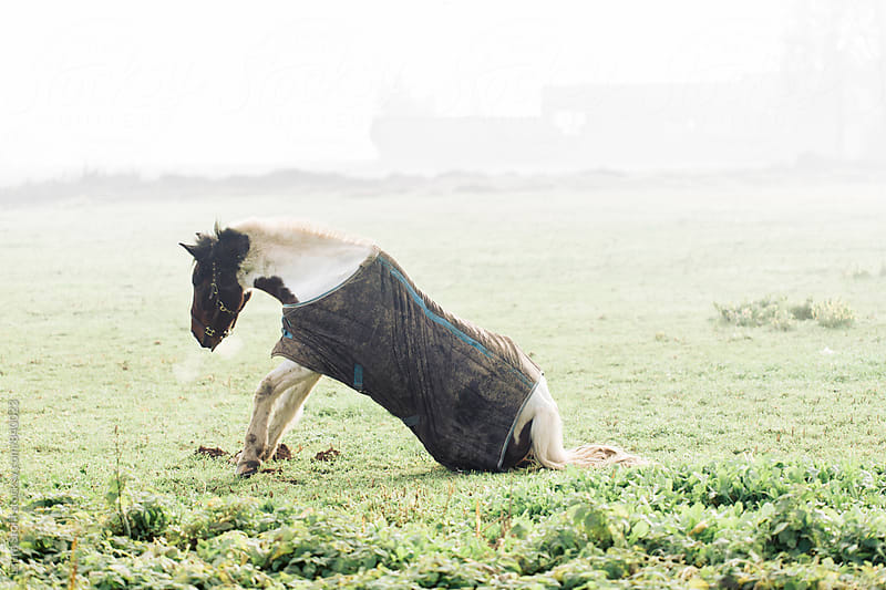 Horse standing up from the ground in foggy field in winter morning by Laura Stolfi for Stocksy United