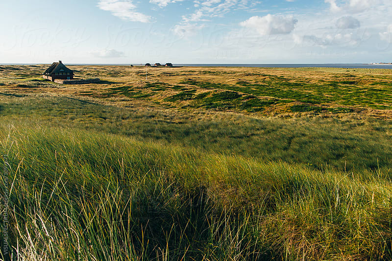 Typical Grassy North Sea Landscape on Sunny Morning (Sylt, Germany) by VISUALSPECTRUM for Stocksy United