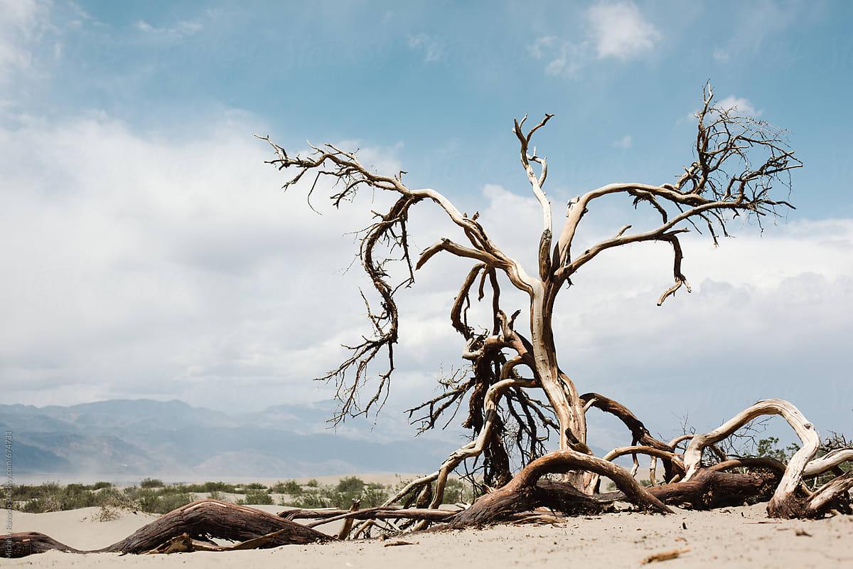 Free Stock photo of Leafless dead tree on grassy landscape