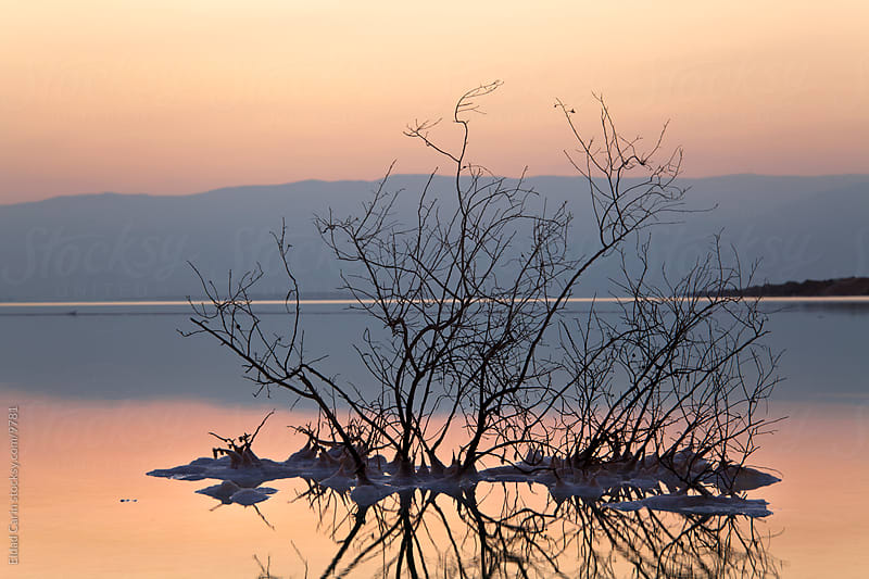 Dead Sea Sunrise - Withered Bush at Dawn by Eldad Carin for Stocksy United