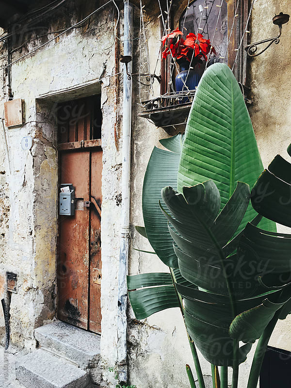 Plant in Front of Old House in Palermo Sicily by Julien L. Balmer for Stocksy United
