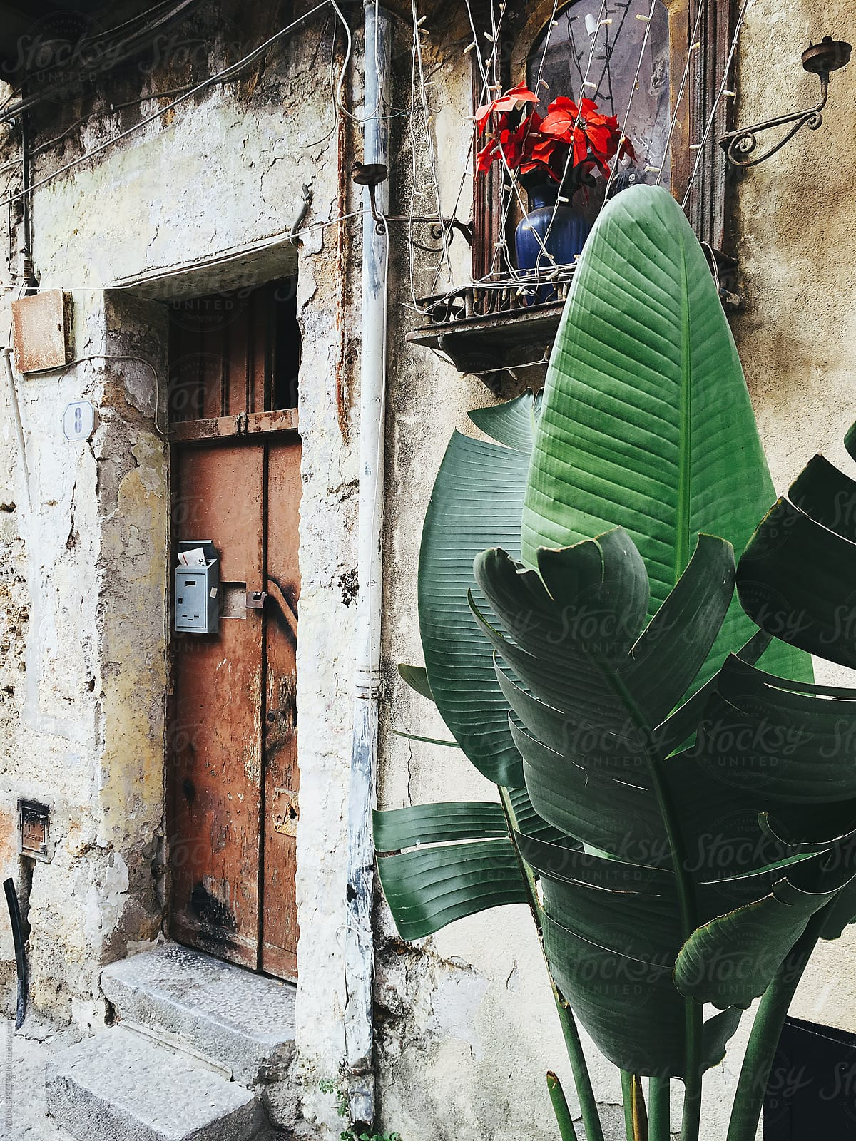 Plant In Front Of Old House In Palermo Sicily | Stocksy United