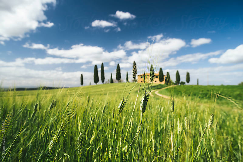 Traditional Villa with cypresses in a field in Tuscany by GIC for Stocksy United