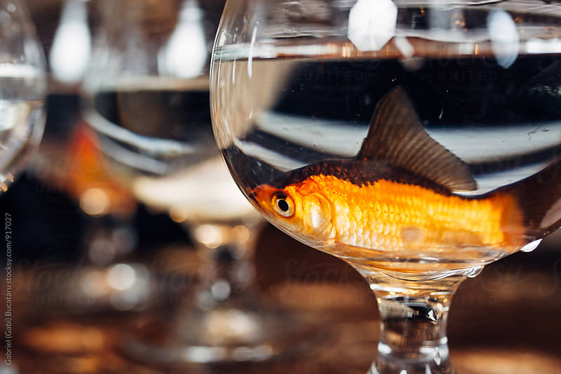 Fish in a wine glass by Gabriel (Gabi) Bucataru for Stocksy United