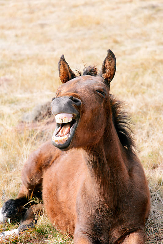 Laughing horse by Pixel Stories for Stocksy United