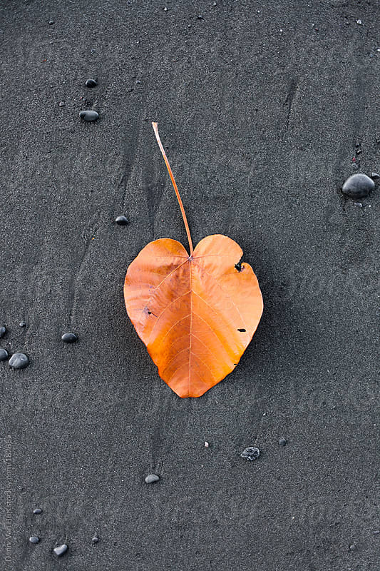Big orange leaf on black sand. by Denni Van Huis for Stocksy United