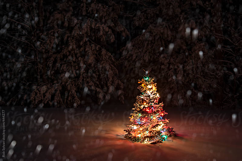 Snow Falling on Christmas Tree by Rob Sylvan - Stocksy United