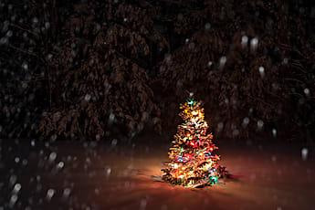 Christmas Tree Stocksy United