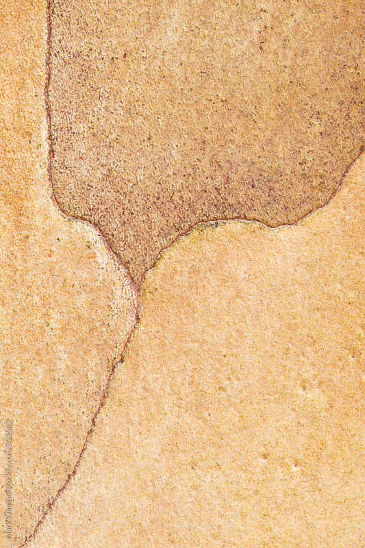 Japanese Stewartia bark patterns by Mark Windom for Stocksy United