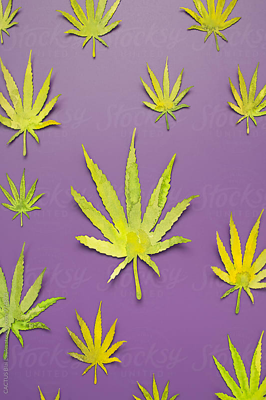 Marijuana by CACTUS Blai Baules for Stocksy United
