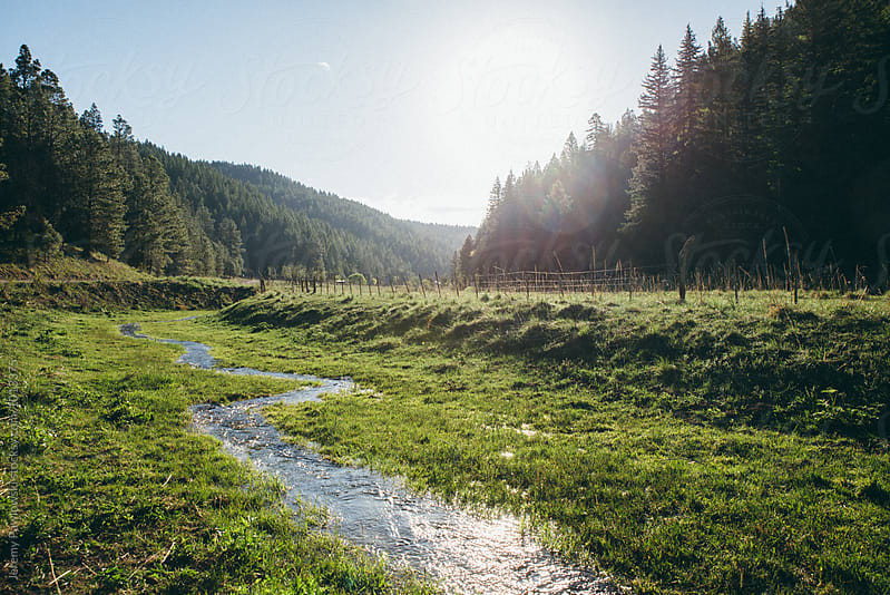 Stream running through national forest in New Mexico by Jeremy Pawlowski for Stocksy United