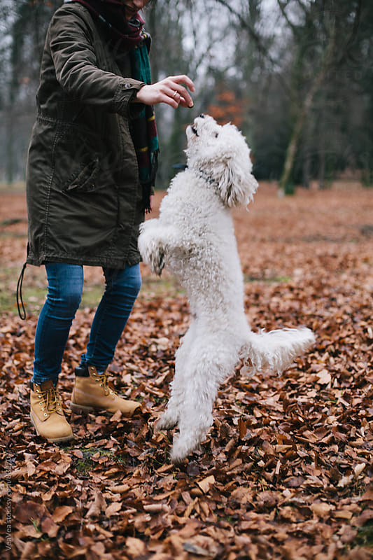 Woman training her dog outdoors by VeaVea for Stocksy United