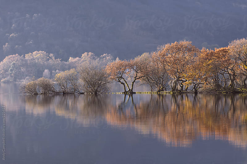 Trees in fall colors reflected on a lake by Andy Campbell for Stocksy United